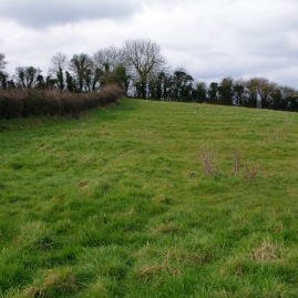 Ridge and furrow field