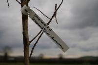 Tree label