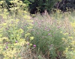Wildflowers in Brookland Wood