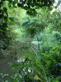 The pond in Brookland Wood