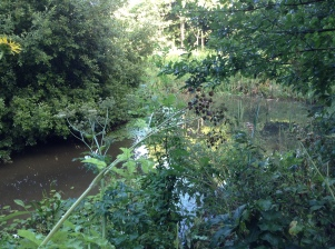 Brookland Wood's Millennium feature...