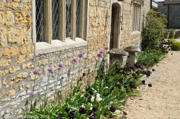 Tulips and Alliums at The Court