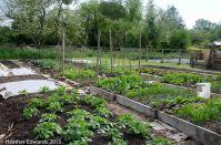 Charles Dowding's veg garden