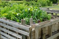 Vegetables growing in a raised bed made from old pallets - Charles Dowding