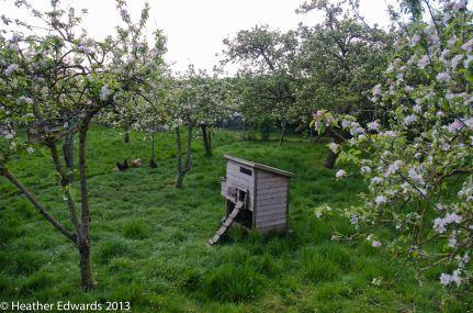 Orchard at Manor Farm