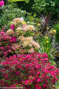 Azalea and Pieris at 'Canada'