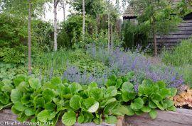 Gert Schley's garden, Meadowside